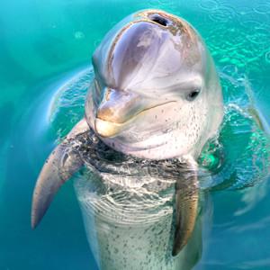 dolphin swim - Dolphin Pics