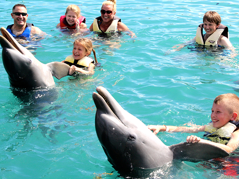 Swim With The Dolphins In Dolphin Encounters