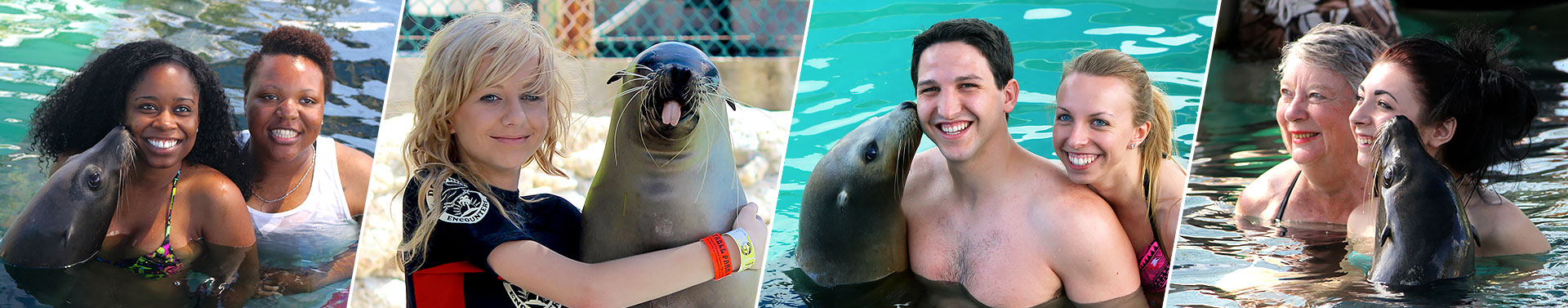 sealion-encounter