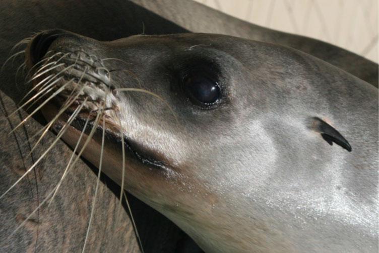 sea-lion-02