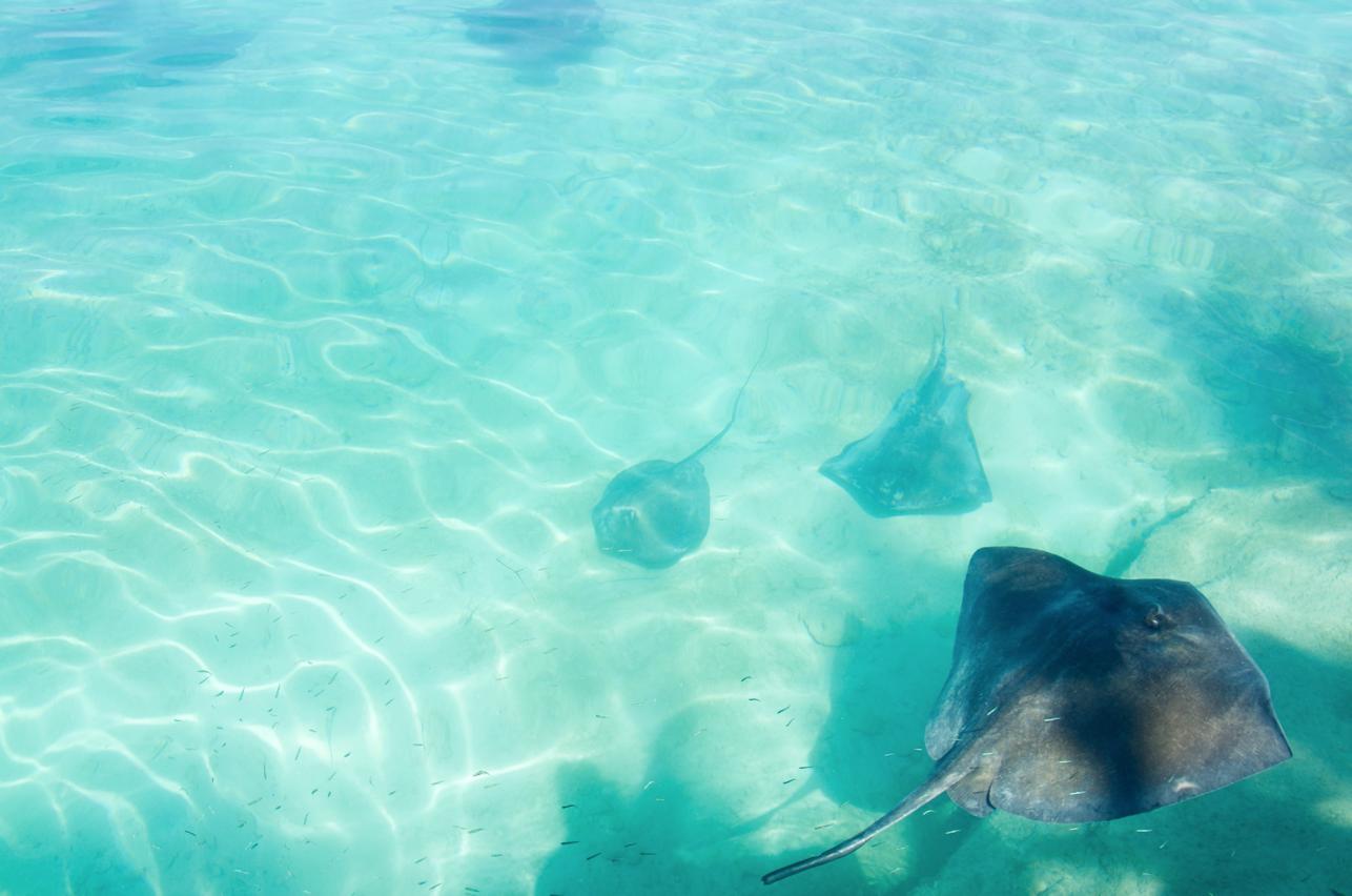 Stingray Encounter Blue Lagoon