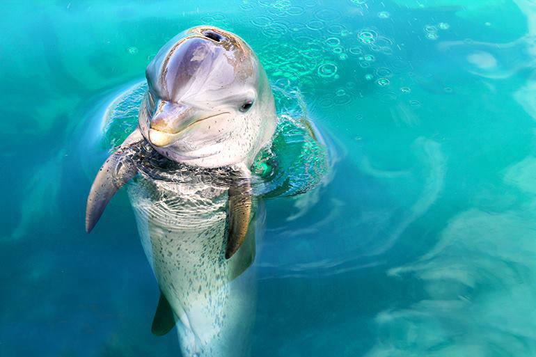 DolphinEncountersBahamas